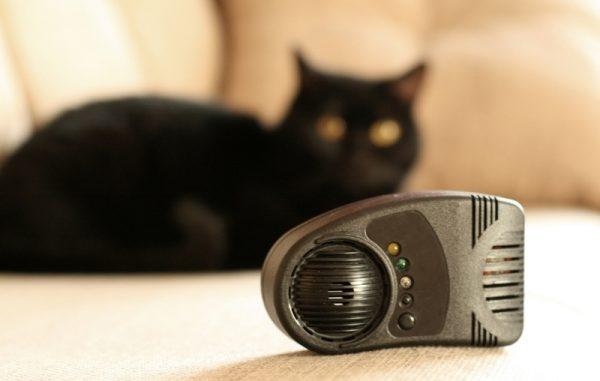 Электрокот и кот