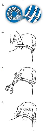 Инструкция по применению ошейника от блох и клещей
