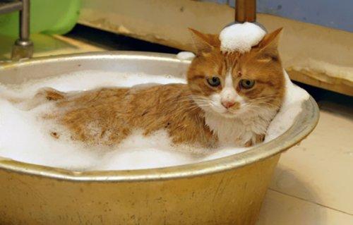 Кот в тазике