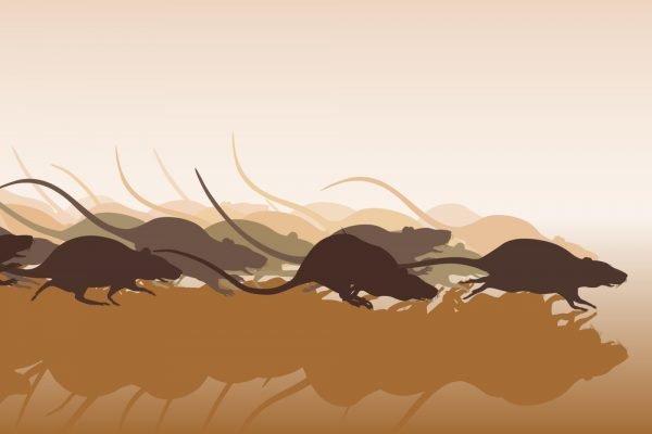 Крысы убегают от ультразвука