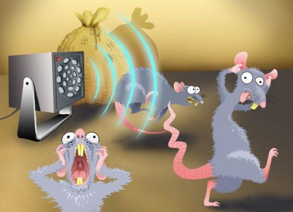 Действие ультразвука на мышей и крыс