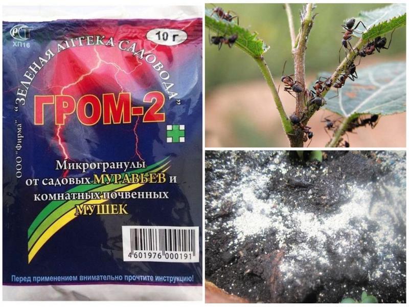 Средство Гром-2 в борьбе с муравьями и мошками