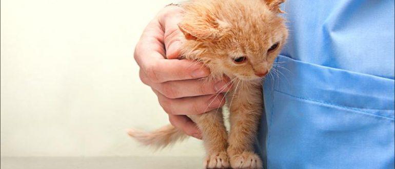 Как вылечить блох у домашних животных при помощи шампуня