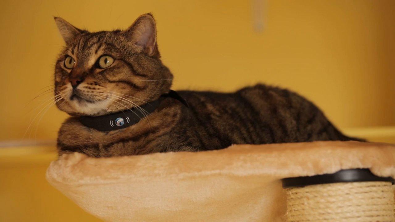 кошка в ошейнике
