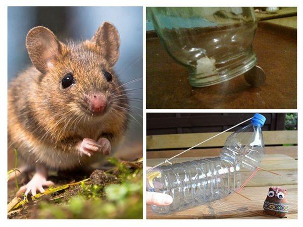 Самодельные ловушки для мышей