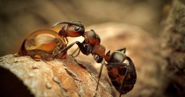 муравей ест