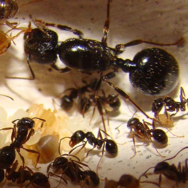 муравьи