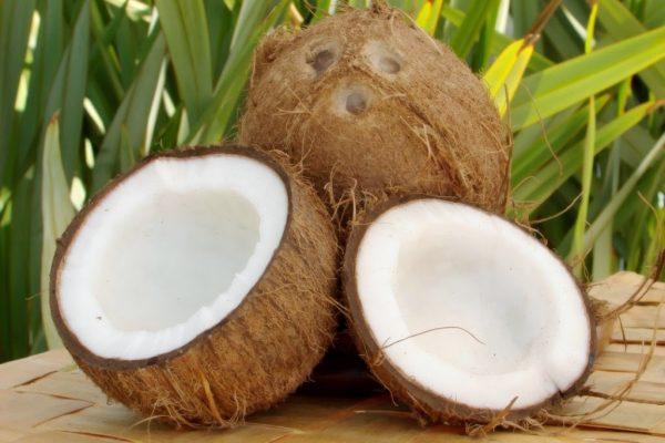 Молодой кокосовый плод