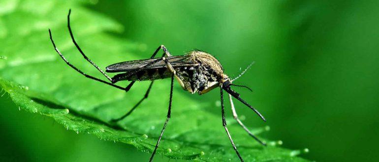 комар и трава