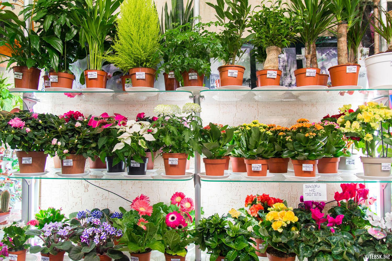 Букет, заказ цветов из голландии комнатных растений