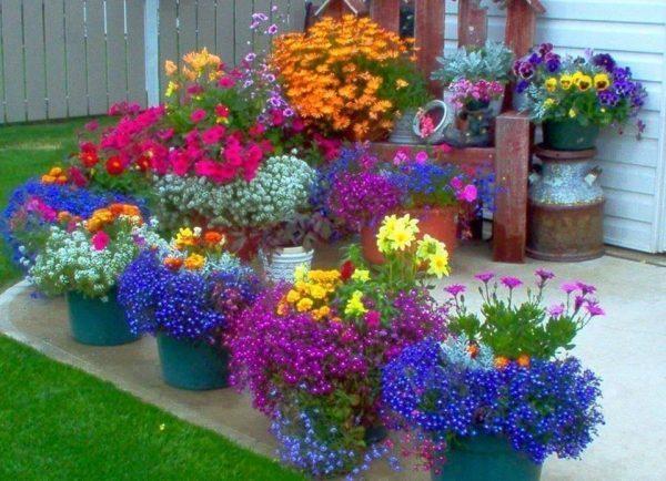 Цветы на участке в больших горшках