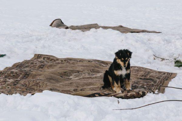 Ковёр на снегу