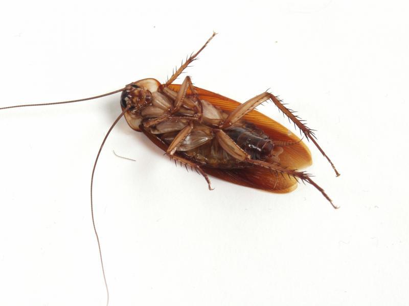 Что самое эффективное от тараканов