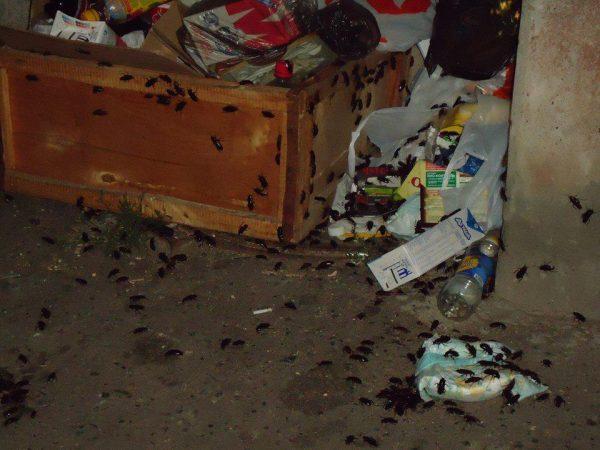 Антисанитарные условия и тараканы