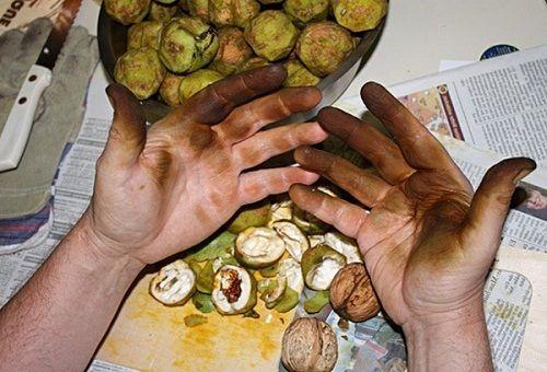 Грязные руки после чистки орехов