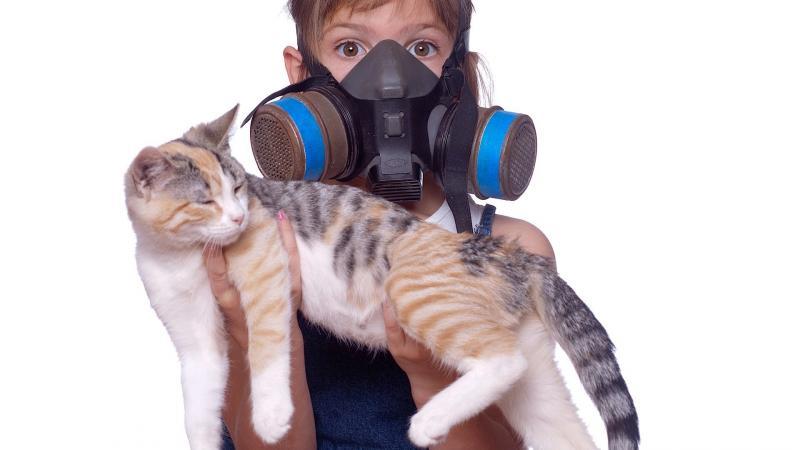 Как избавиться от запаха кошачьей мочи.