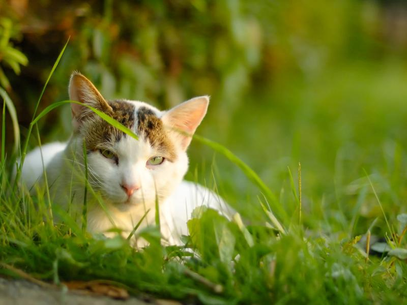 Клещ на кошке