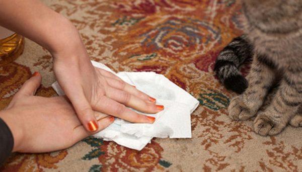 Кошачью мочу на ковре промакивают салфеткой