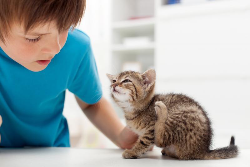 Средство от блох для котят 3 месяца: вывести блох у котенка с 3х месяцев
