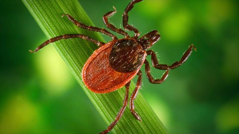 Мощные средства защиты от маленького и опасного паразита — клеща