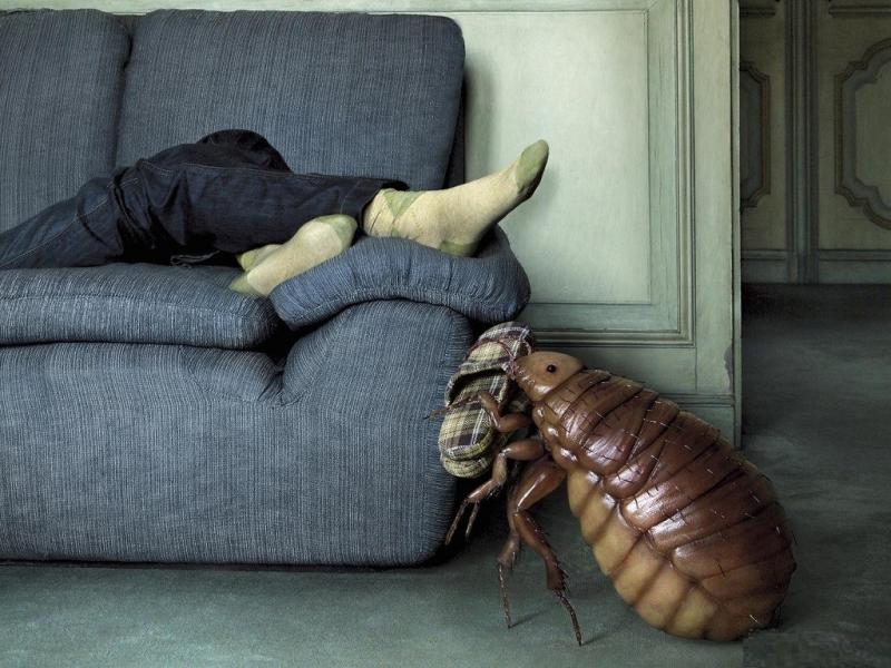 Причины возникновения постельных блох и методы борьбы с ними в домашних условиях