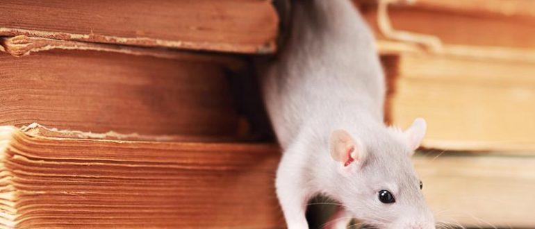 Крысы в частном доме