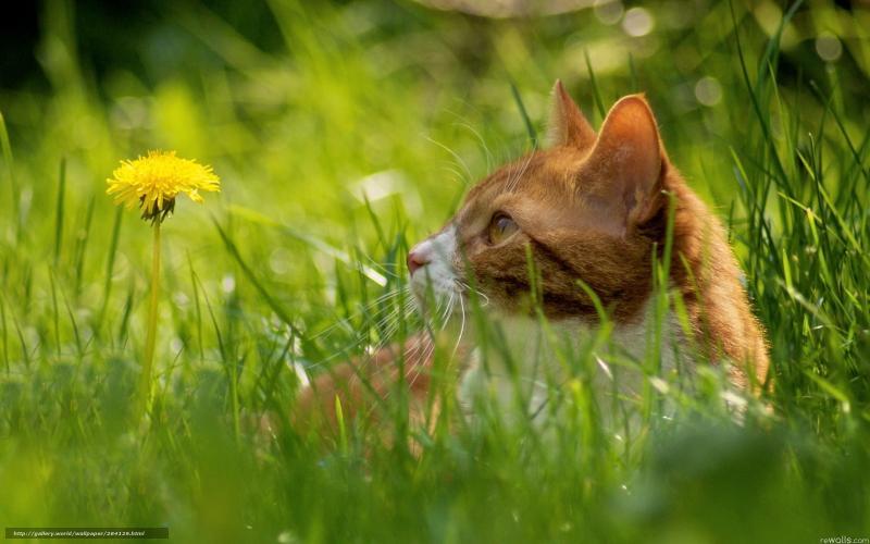 Что делать, если кошку укусил иксодовый клещ?