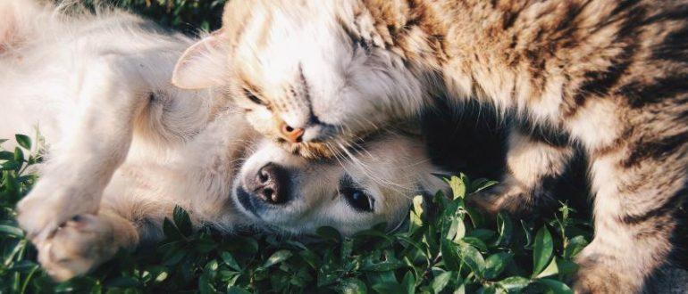 Собака и кошка на траве