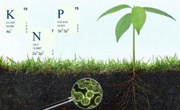Почва в масштабе, калий, фосфор и азот