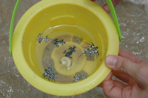 Рыбы и моллюски в миске с водой
