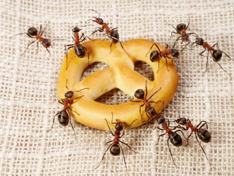Средства для борьбы муравьями