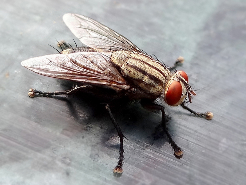 Как избавиться от мух в квартире и при чём тут пластиковые бутылки