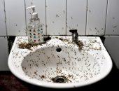 Насекомые, живущие в ванной