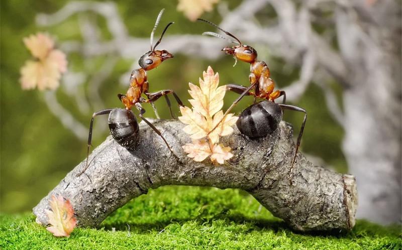 Место муравьёв в пищевой цепочке