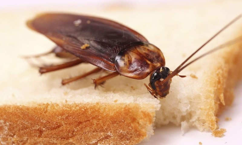 Дохлый таракан