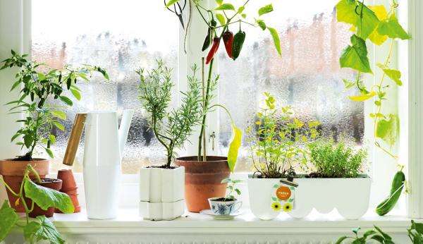 Запотевшее окно из-за растений