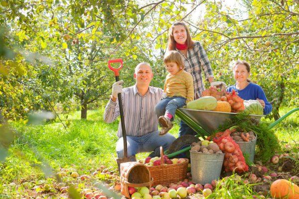 Семья собирает урожай
