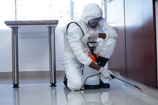 Обрабатывают жилище инсектицидным раствором