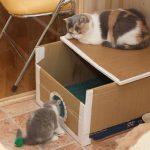 Кошки в домике из картона