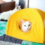 Кошка в домике из футболки