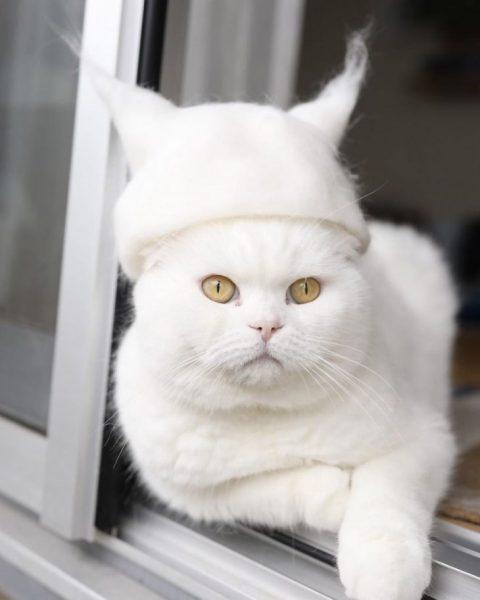 Кот в шапке из своей шерсти