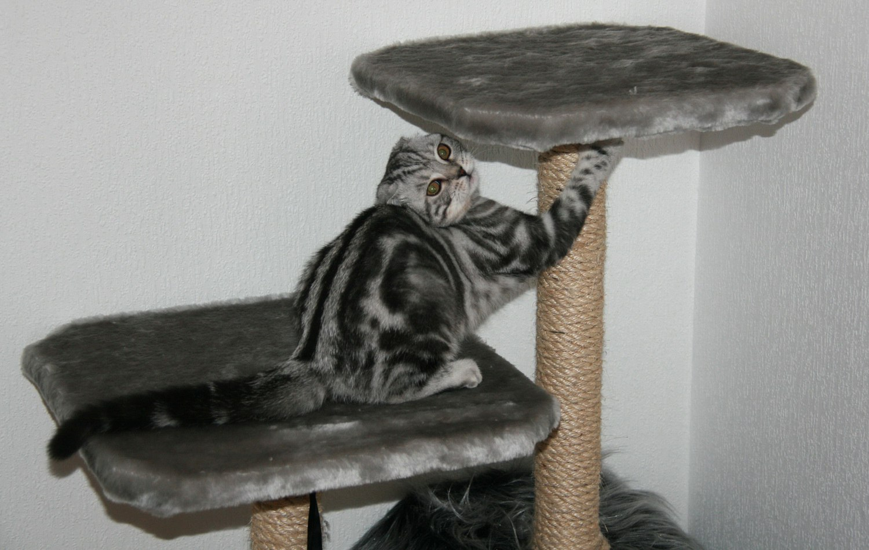 Когтеточка для кошки: виды, фото, как выбрать
