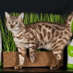 Травяной наполнитель Fix и кошка на фоне травы