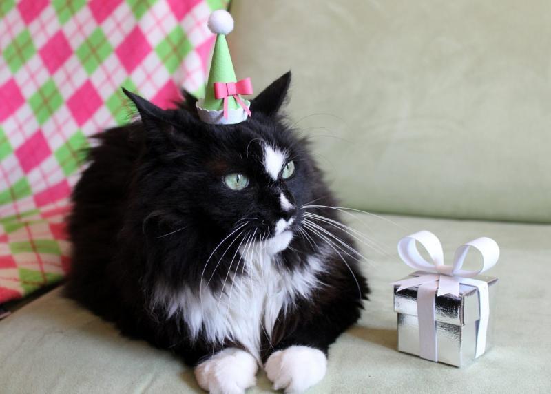 День рождения чёрного кота