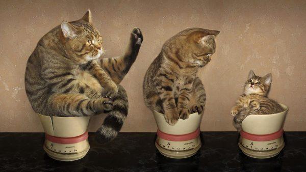 Три кошки на весах