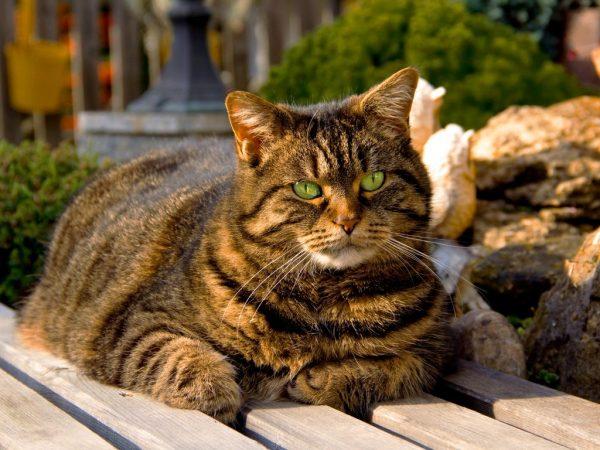 Упитанная кошка на скамье