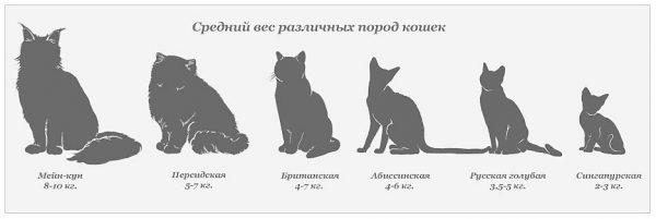 Средний вес кошек разных пород