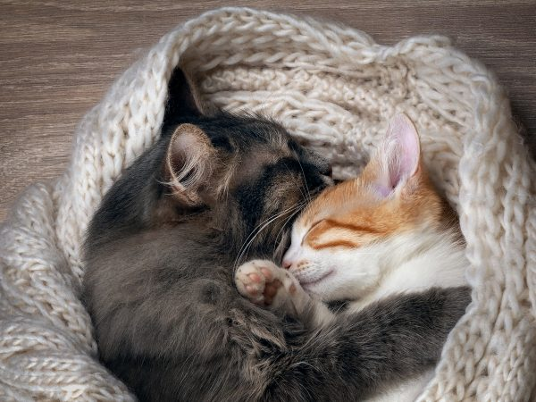Кот и кошка спят на вязаном пледе