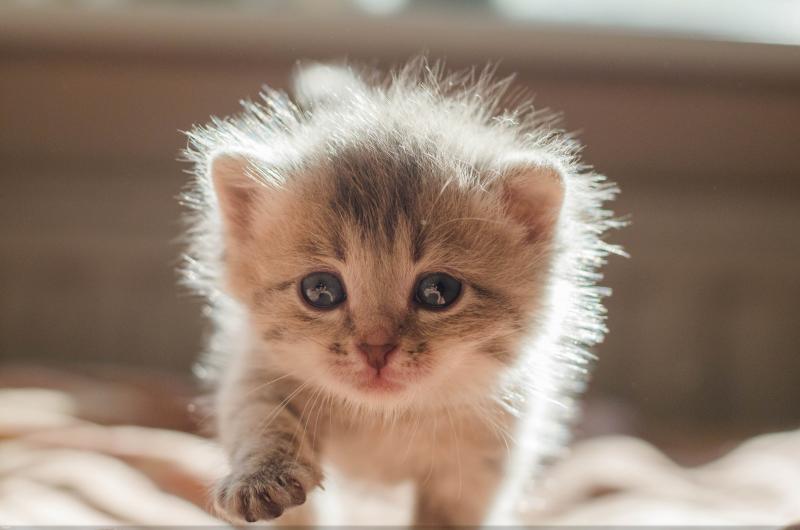 Как узнать пол новорождённого котёнка