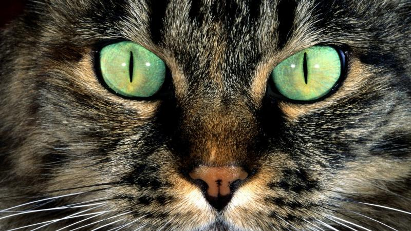 Как видят мир кошки: особенности зрения, различают ли цвета